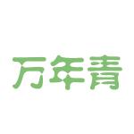 万年青(上海)运动器材有限公司logo