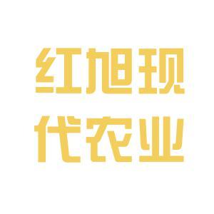 红旭logo