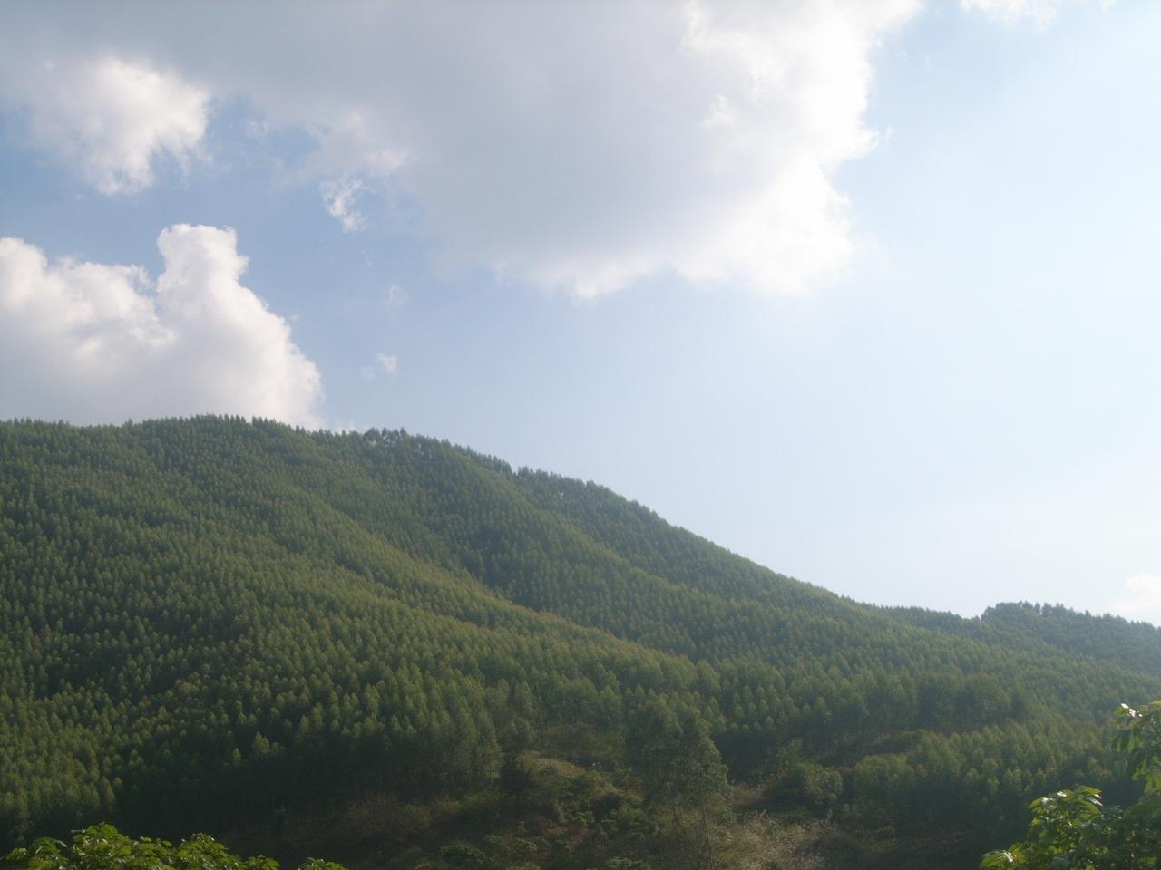 广西理文林业科技发展有限公司logo